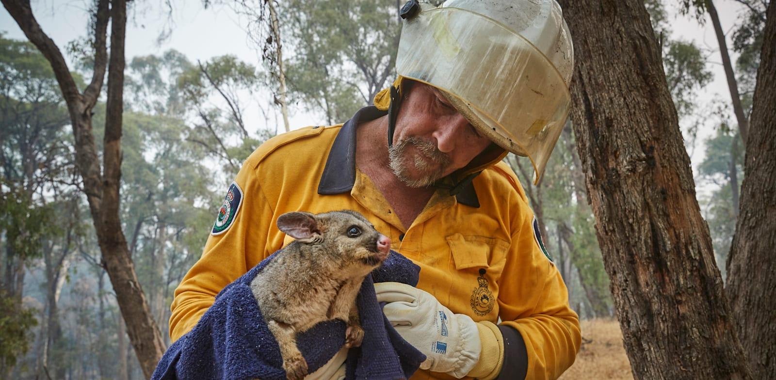 כבאי מחלץ פוסום מהשריפות באוסטרליה / צילום: Kiran Ridley / Greenpeace