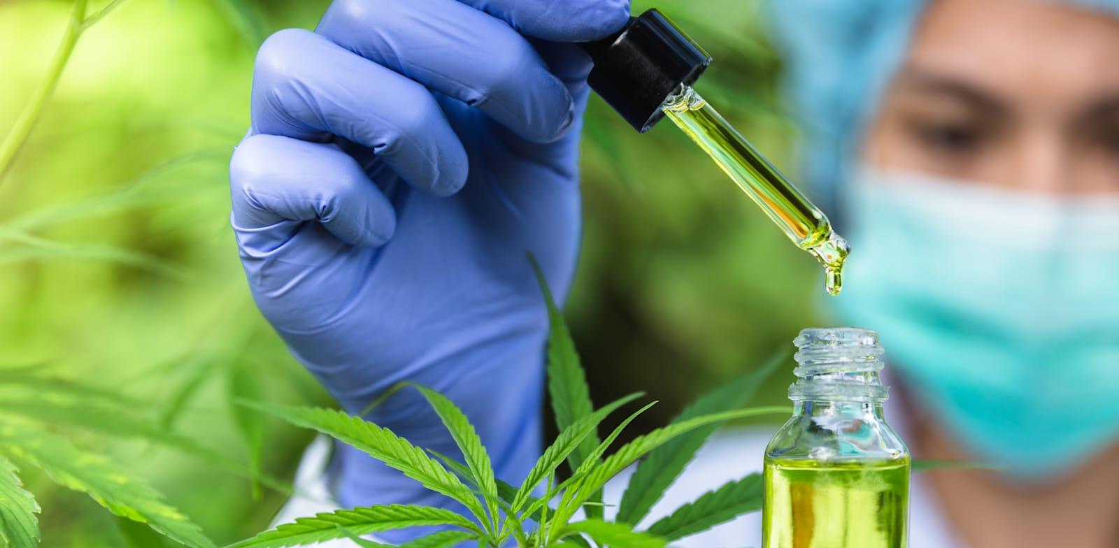 קנאביס רפואי. בעל מעל ל-400 תרכובות כימיות / צילום: Shutterstock/א.ס.א.פ קרייטיב