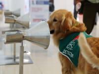 כלב במשטרת צ'ילה באימון  להרחת וירוס הקורונה / צילום: Reuters, Ivan Alvarado
