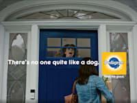 קמפיין פדיגרי. אין תחליף לאהבה של כלב / צילום: צילום מסך