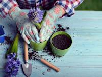 התחלות חדשות. גינון / צילום: Shutterstock