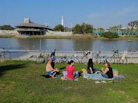 אנשים יושבים בפארק בתל אביב בתחילת ינואר / צילום: איל יצהר