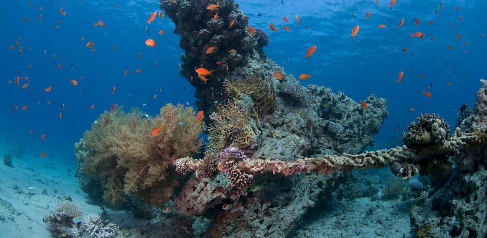 """אלמוגים בחוף קצא""""א אילת / צילום: אמיר שטרן"""