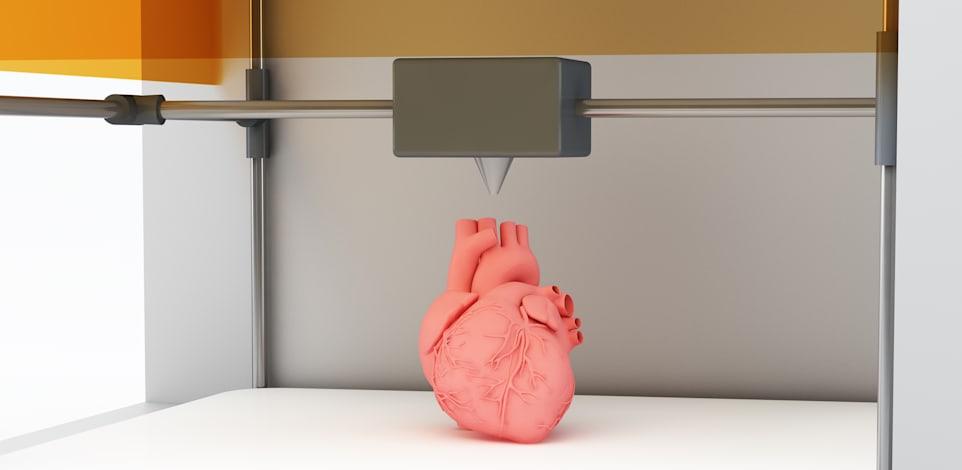 מידול תלת מימדי של לב אנושי / צילום: Shutterstock