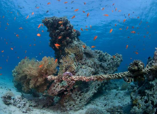 אלמוגים בחוף קצא''א אילת / צילום: אמיר שטרן