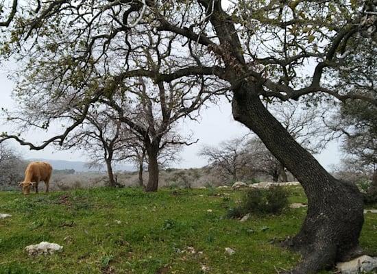 היער המכושף. אלוני אבא / צילום: יותם יעקבסון