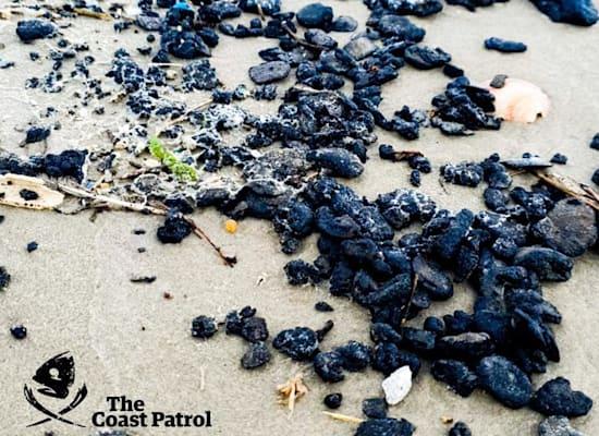 זפת בנווה ים / צילום: אופיר סעדון