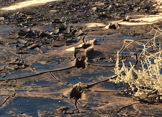 דליפת הנפט בשמורת הטבע עברונה / צילום: המשרד להגנת הסביבה