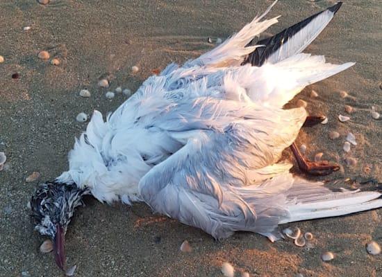עוף פגוע מזיהום בנווה ים דרום / צילום: איגוד ערים שרון כרמל