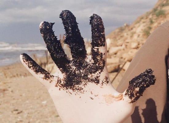 זפת שנאספה בחוף על ידי מתנדב / צילום: שאול גולדשטיין, רשות הטבע והגנים, עידו פרי