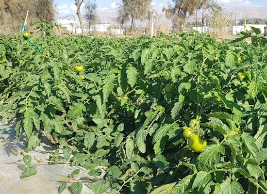 סיורי חקלאות מקומית בערבה / צילום: אורלי גנוסר