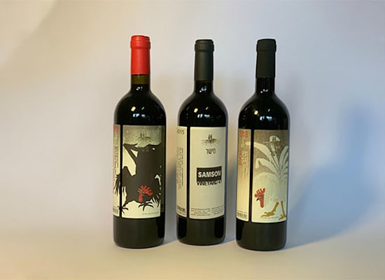 יינות יקב מישר. מימין: מורבדרה קברנה, שמשון, שיראז / צילום: שיר בדיחי