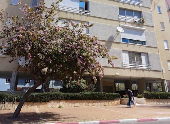 רחוב ירושלים 5, נתניה / צילום: איל יצהר