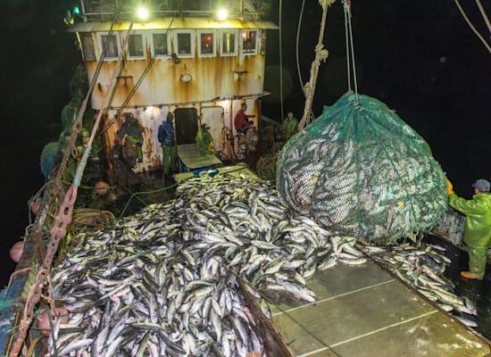 דייגים על סיפון מכמורת בשעות הלילה במאוריטניה, הסובלת מדייג יתר / צילום: Pierre Gleizes / Greenpeace