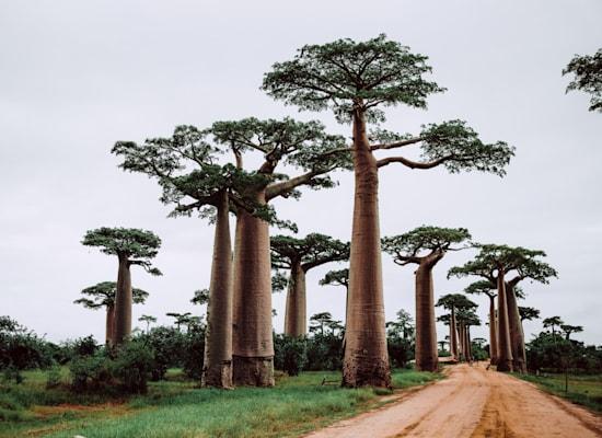 מדגסקר / צילום: Unsplash