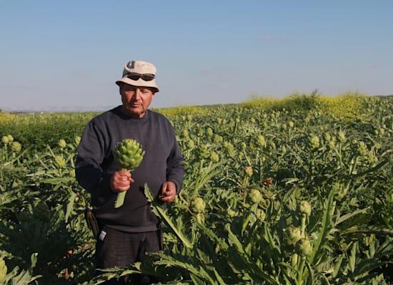 נעם יעקבא בשדות הארטישוק / צילום: אורלי גנוסר