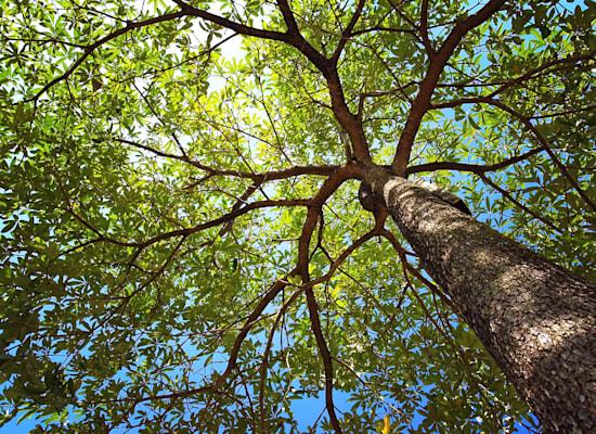 בשכונות אמריקאיות של בעלי הכנסות נמוכות יש פחות עצים והטמפרטורות בהן בממוצע חמות הרבה יותר