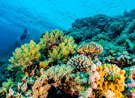 שונית האלמוגים באילת. דליפת נפט עלולה להיות הרסנית / צילום: Shutterstock, yeshaya dinerstein
