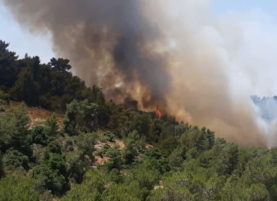 השריפה בהרי ירושלים / צילום: דרור ברון, רשות הטבע והגנים