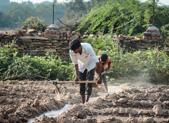 חקלאים בהודו / צילום: Shutterstock