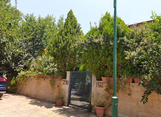 רחוב הזית 210, שדי חמד / צילום: איל יצהר