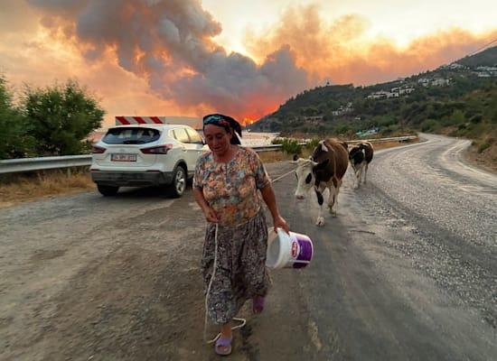אישה וחיות המשק שלה עוזבים את העירייה קוקרטמה, שסמוכה לבודרום בטורקיה / צילום: Associated Press, Mehmet Guzel