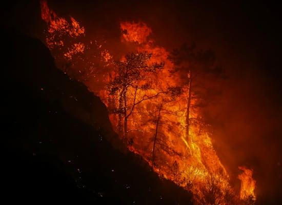 יער שנשרף ליד עירייה קוקרטמה בטורקיה / צילום: Associated Press, Emre Tazegul
