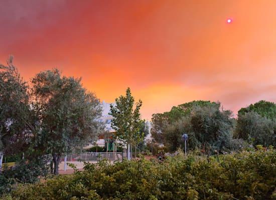 השריפה סמוך לירושלים / צילום: אחוה יאלר צוריה