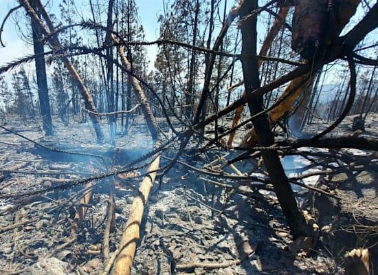 כך נראה השטח אחרי השריפה / צילום: עמיר בלבן, החברה להגנת הטבע