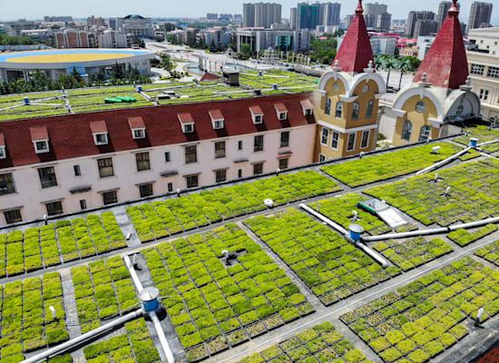הולנד. גגות ירוקים / צילום: Reuters, Zuo Dongchen