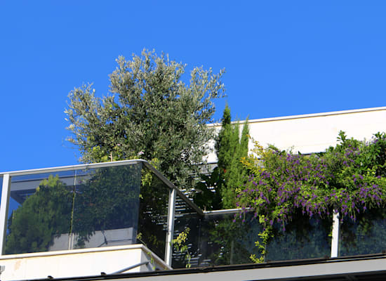 מרפסת עם עצים. ''משקיעים בגינון'' / צילום: Shutterstock