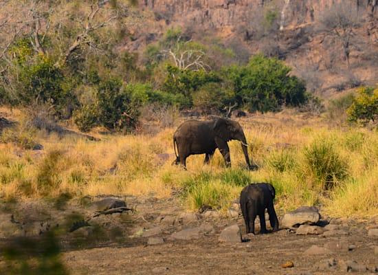 פילים בפארק קרוגר / צילום: Shutterstock