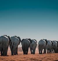 פילים בנימיביה / צילום: Sergi Ferrete
