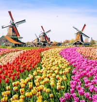 שדה של צבעונים בהולנד / צילום: Shutterstock, Olena Z