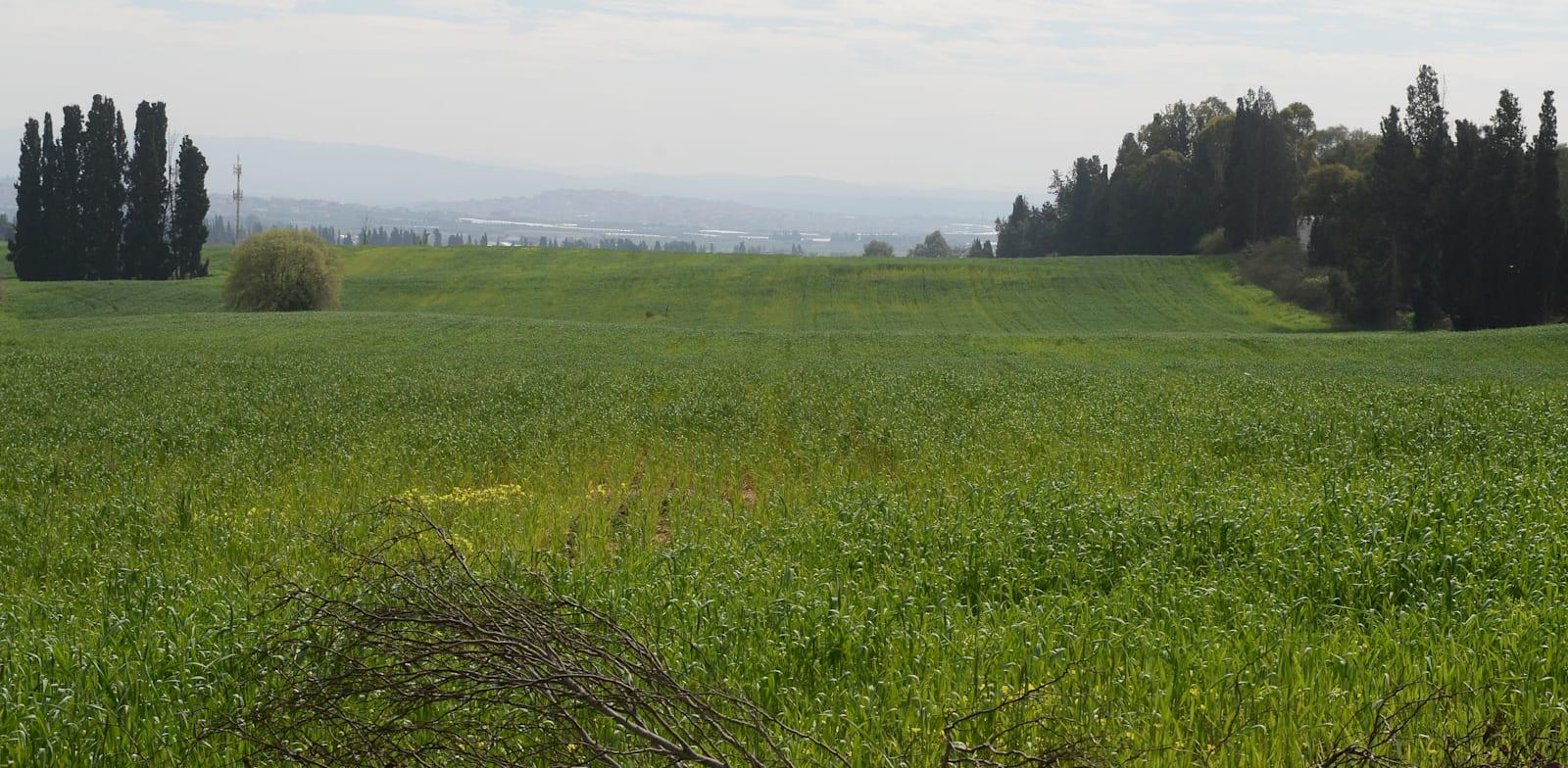 """קרקע חקלאית בפרדס חנה. במקרה של שינוי ייעוד, רמ""""י תדרוש את הפסקת החכירה / צילום: איל יצהר"""