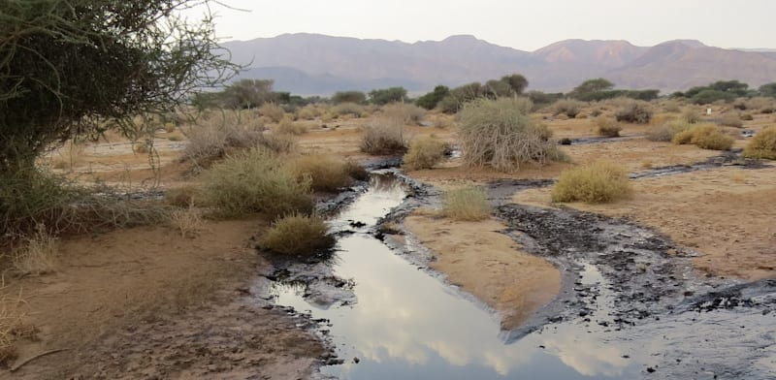 """זיהום פיצוץ צינור נפט של קצא""""א בעברונה / צילום: רשות הטבע והגנים"""