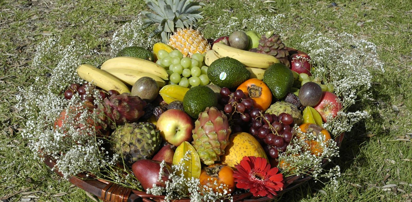 פירות / צילום: תמר מצפי