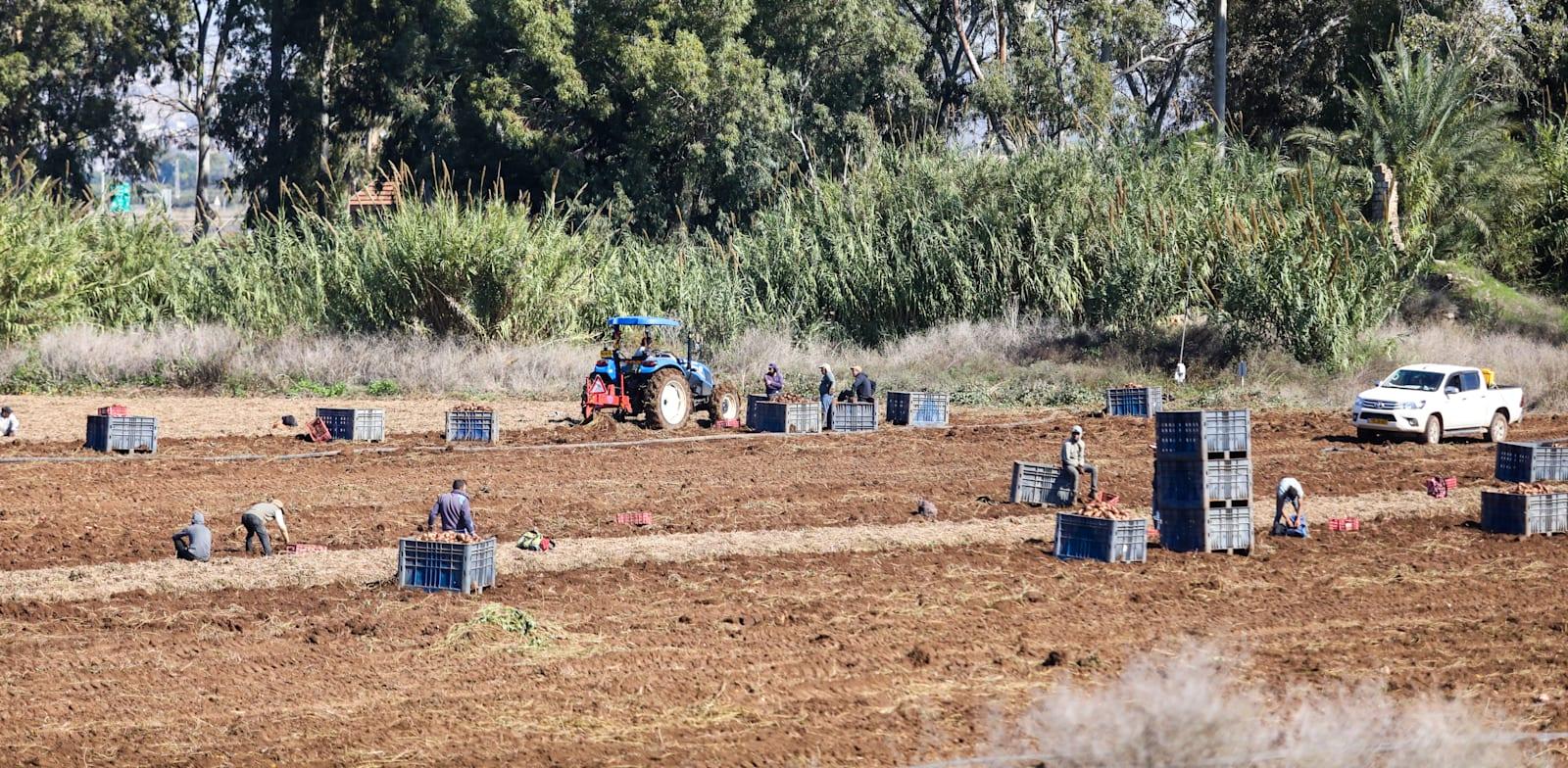 עובדים זרים בשדות חקלאיים / צילום: שלומי יוסף