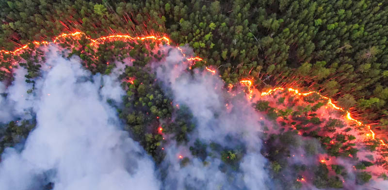 Fires in Siberia  credit: Julia Petrenko / Greenpeace