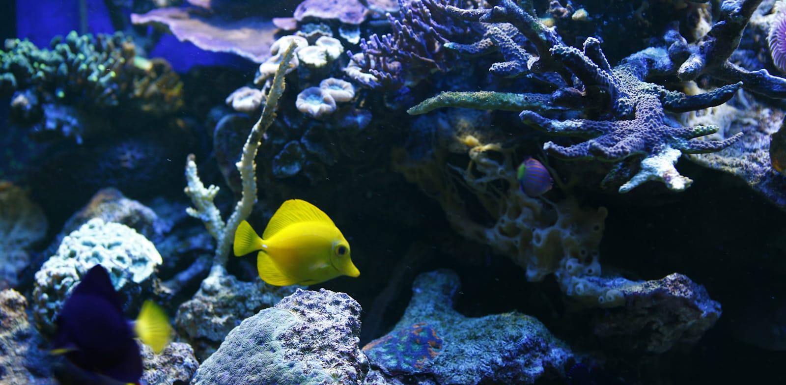 דגים שוחים בקרקעית הים / צילום: כפיר זיו