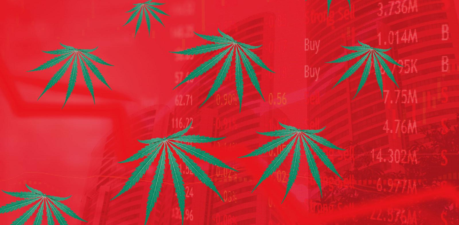מניות הקנאביס שהתחבבו על גולשי רדיט עברו לנפילות / צילום: Shutterstock