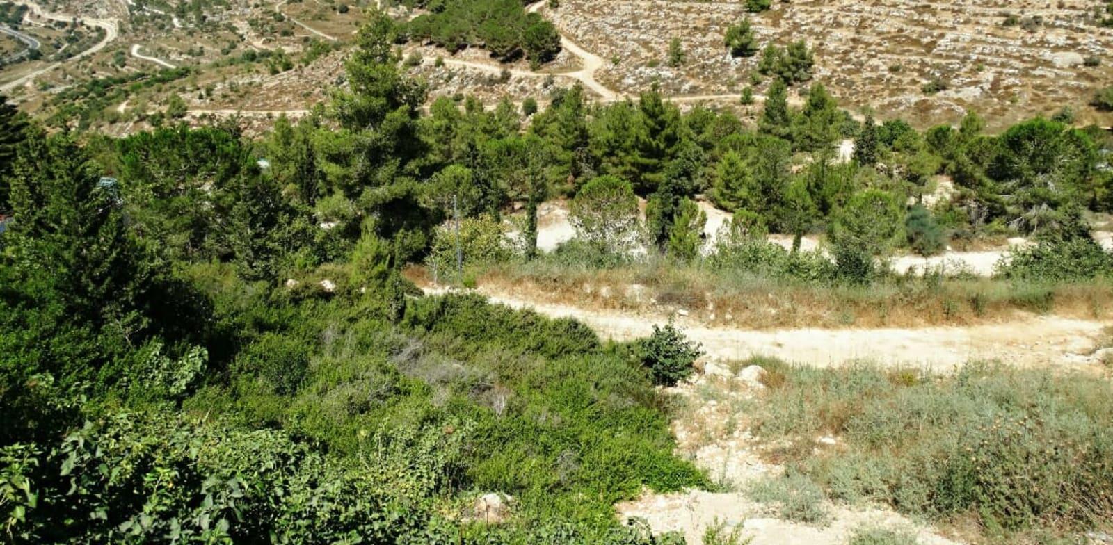 """אזור """"רכס לבן"""", ירושלים / צילום: דב גרינבלט, החברה להגנת הטבע"""