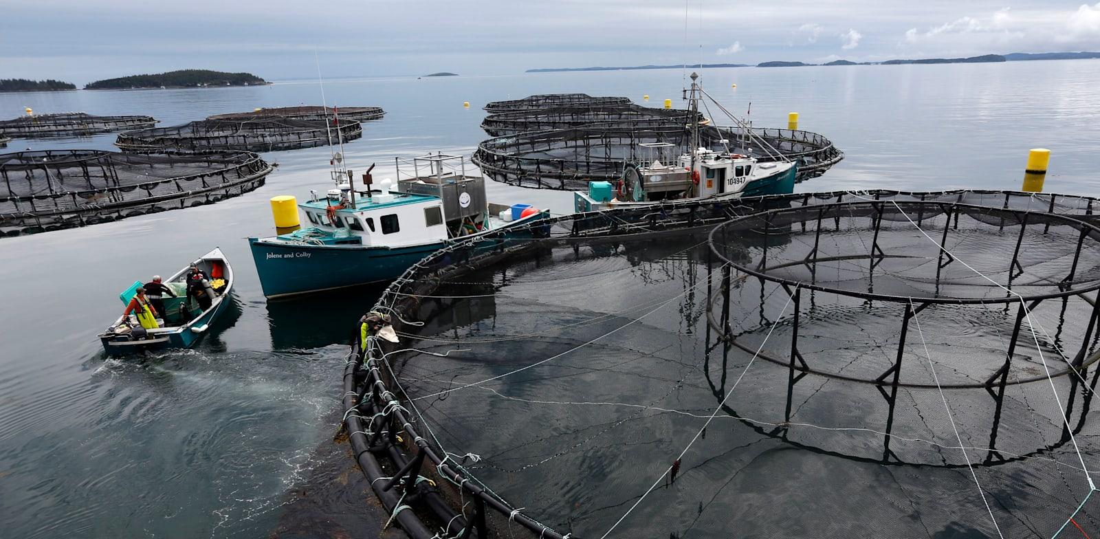 חוות דגי סלמון בקנדה / צילום: Associated Press, Robert F. Bukaty