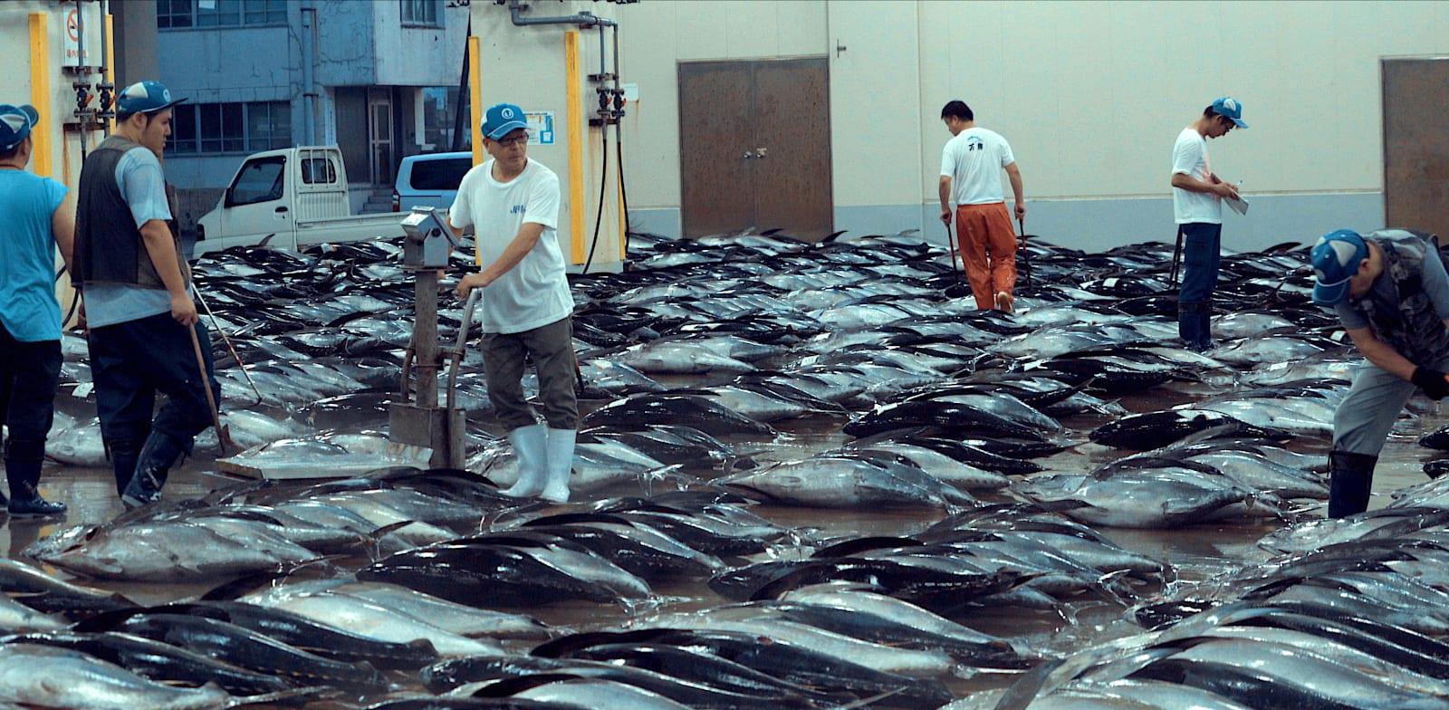ציד בלתי מבוקר של דגי טונה ביפן / צילום: נטפליקס