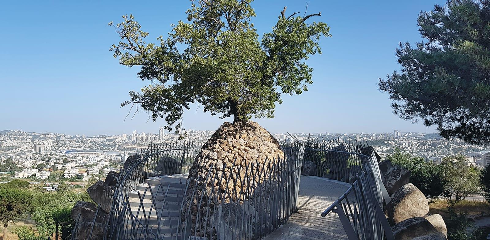 הפרויקט הפיסולי בשילוב צמחים של דן מורין / צילום: אורלי גנוסר