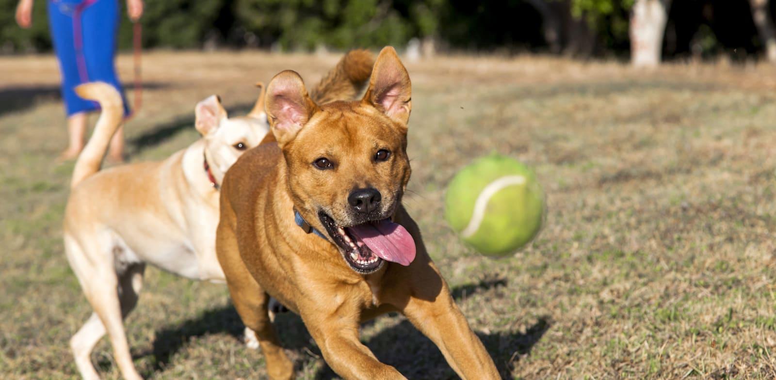 על הנחלה הוקם עסק לגידול כלבים. בני הזוג נמנעו מלרשום את הנחלה בטאבו / צילום: Shutterstock