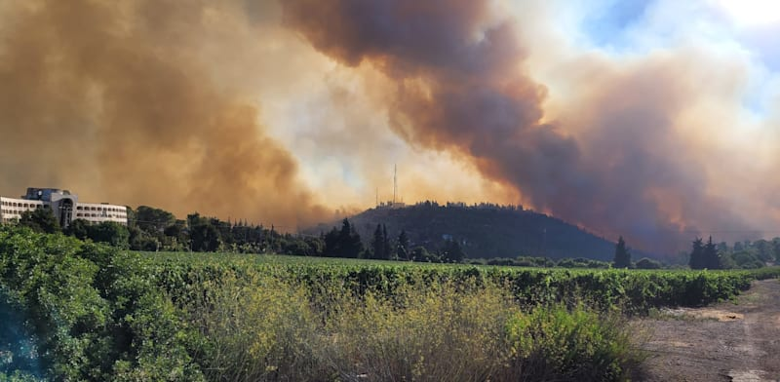 The blaze in the Jerusalem Hills, August 2021 Credit: Boris Kripak, Israel Nature and Park Authority