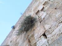הכותל המערבי. שם מוטמנים המכתבים שנשלחים לאלוהים / צילום: עינת לברון
