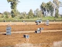 """קטיף בשדות חקלאיים. ארגוני החקלאים מעדיפים את השיטה הנוכחית של חסימת תחרות מחו""""ל / צילום: שלומי יוסף"""