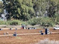 קטיף שדות חקלאיים / צילום: שלומי יוסף